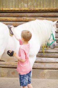 Vorbereiten der Pferde